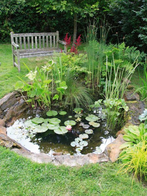 Servicios de jardinería para la creación de jardines acuáticos