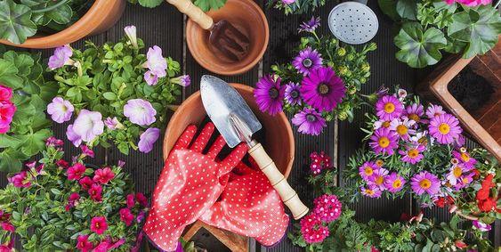 Servicios de jardinería hecho por profesionales